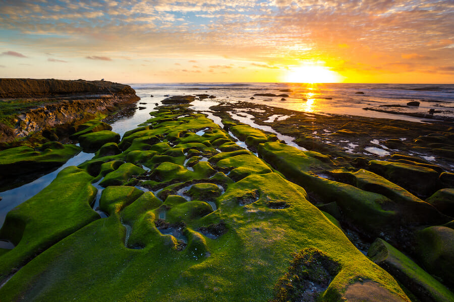 The sunsets over the waters of the La Jolla coves and the green ocean moss on the ground