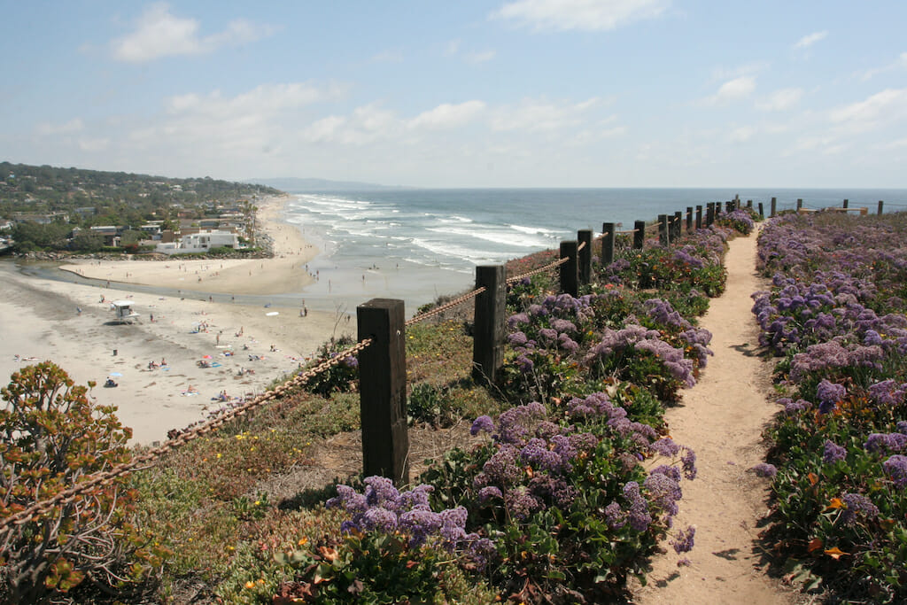 People leisurely laying and playing on the Del Mar beach while gorgeous plants bloom on a nearby hiking path