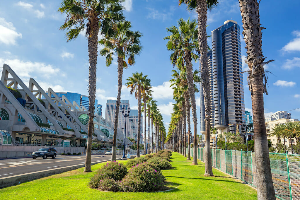 Palm trees lined up in the green grass with a variety of buildings dotting the background in downtown San Diego