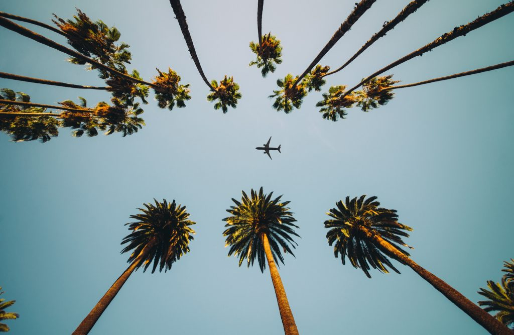 palm trees shot from the ground with an airplane flying between them