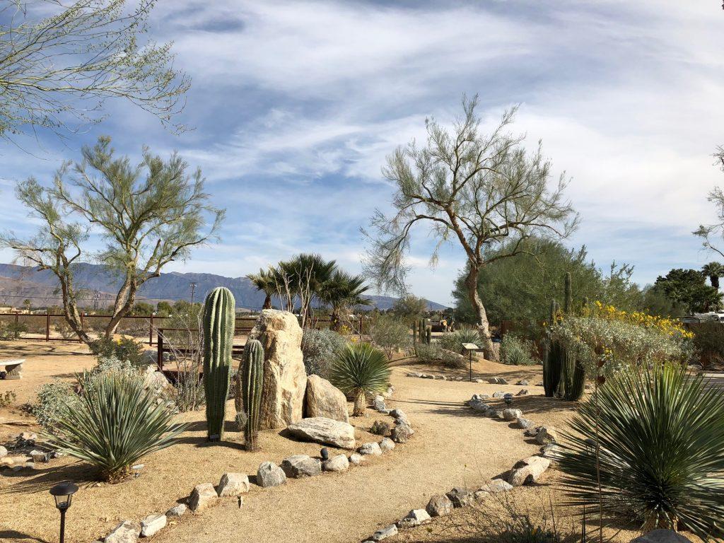 Desert garden with desert flowers and cacti at Borrego Springs Visitor Center