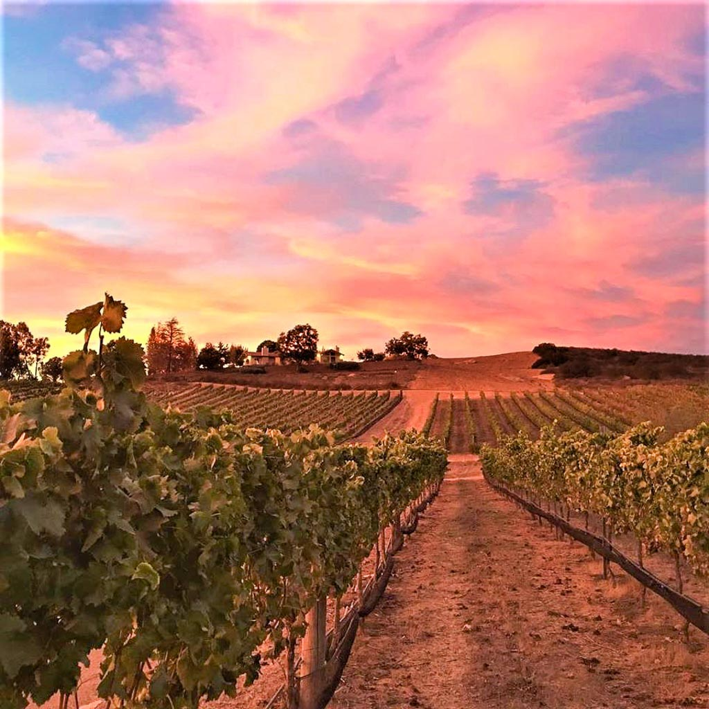 Beautiful pink sunset over the vineyards of Domaine Artefact Vineyard & Winery San Diego