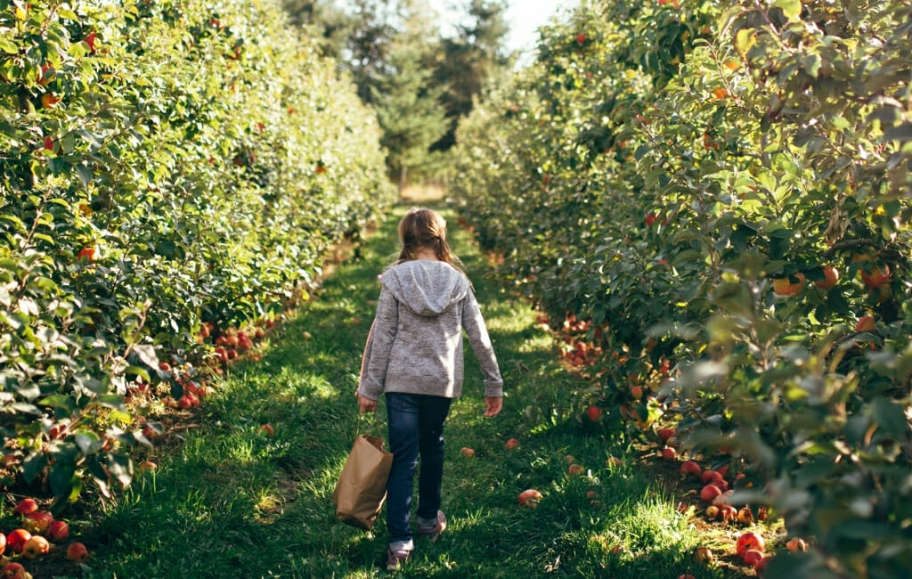 young girl walking through apple orchard with a bag of apples in her hand