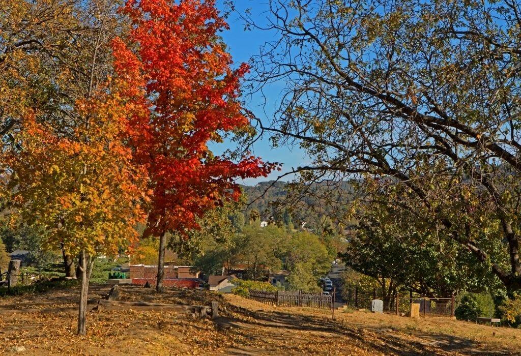 Fall in Julian California - Fall landscape with colorful trees during fall in Julian California