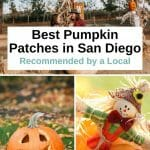 Are you ready for fall? Here are the best San Diego Pumpkin Patches that will put you in the fall spirit. Take a look at these fun pumpkin farms in San Diego county and all the fun activities they offer. From hayrides to pumpkin carving, corn mazes and apple cannons, a trip to a pumpkin patch in San Diego is fun for the whole family. San Diego with kids - San Diego pumpkin patch - San Diego fall activities - San Diego October - San Diego Things to do - San Diego itinerary - San Diego travel tips