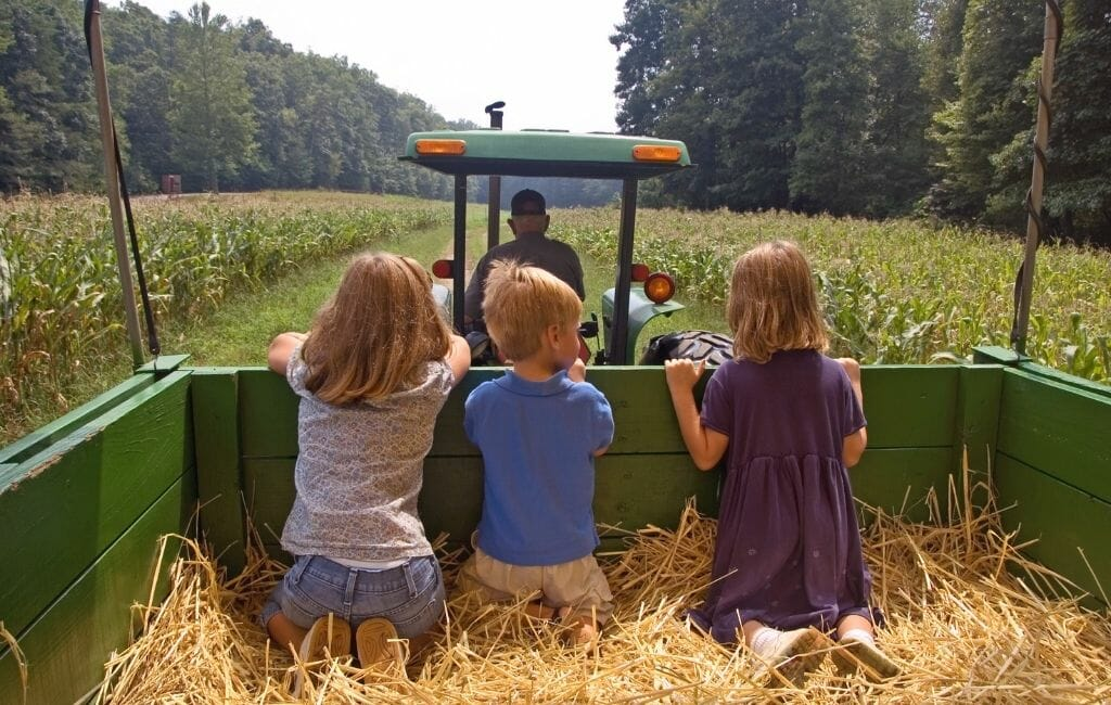 3 small kids on a tractor hay ride through a field