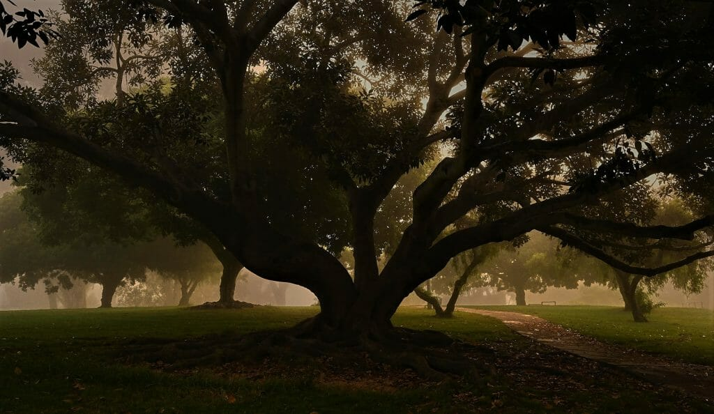 Night photo of large oak tree at Pioneer Park Old Town San Diego