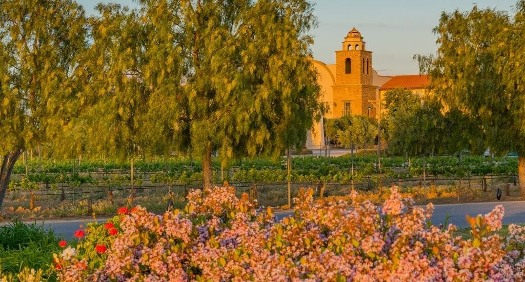 Sunset in Temecula with flowery bush in the foreground and a spanish style tower in the background, partially hidden by trees