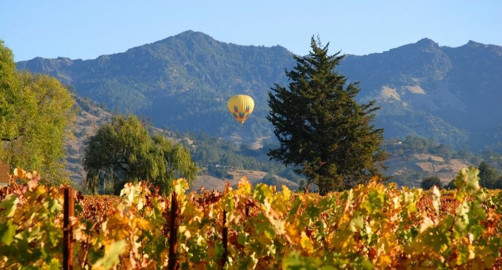 Vineyards in Fall with orange leaves in the foreground, a hot air balloon taking off in the background