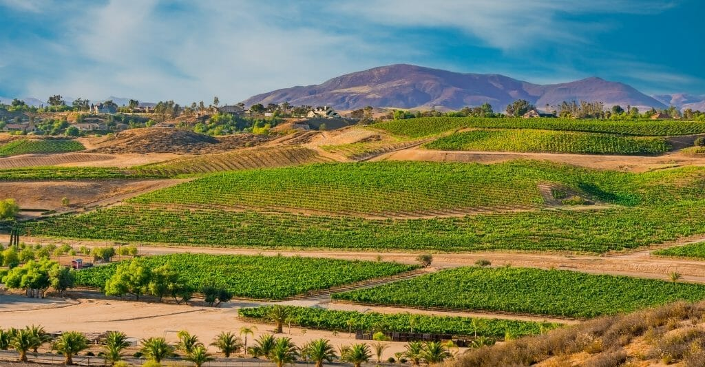 Landscape photo of Temecula vineyards in the foreground with mountains in the background