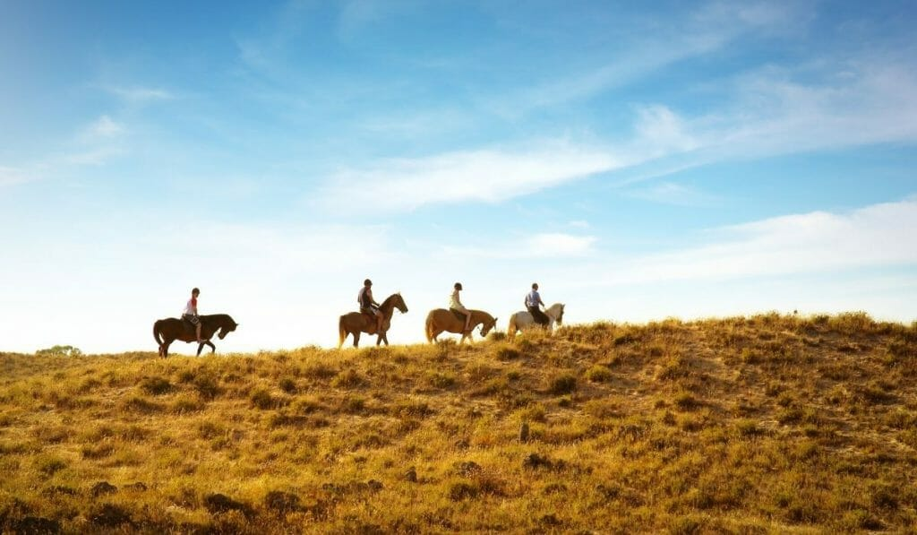 4 horses in the distance riding on the ridge of a grassy hill