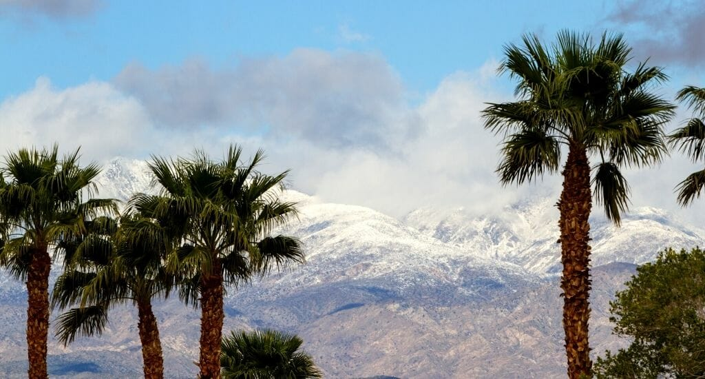 Palm trees in the foreground and snowcapped mountains in Southern California - Snow in San Diego