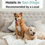 Traveling with your pet to San Diego? Whether you are looking for a pet-friendly hotel near the beach or right in the heart of downtown, we got you covered. Here are the best pet-friendly hotels in San Diego - from budget to luxury. San Diego pets - San Diego pet friendly - San Diego dog friendly - dog friendly hotels San Diego - San Diego hotels - San Diego dogs - Travel With Pets - San Diego Beach Resorts - San Diego Travel Tips - Pet Travel - Visit San Diego