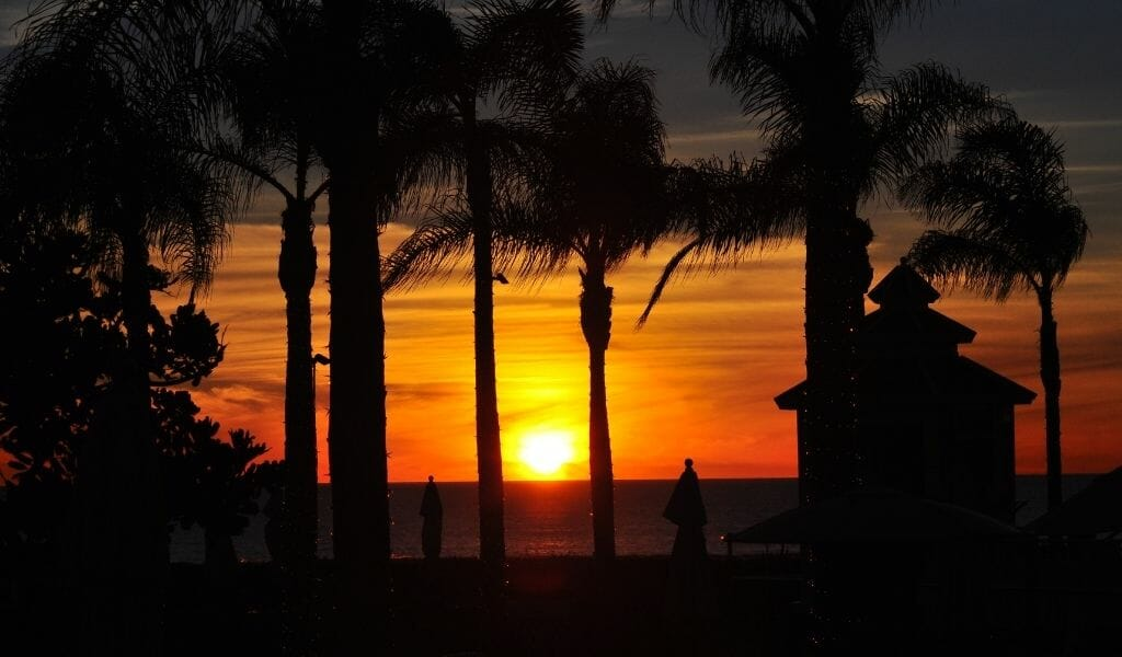 Black shadows of palm trees at Coronado Beach during sunset