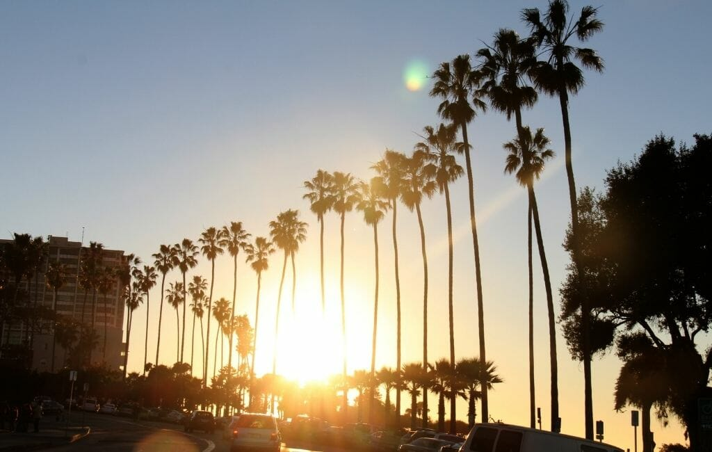 sunset wtih row of palm trees in La Jolla Village