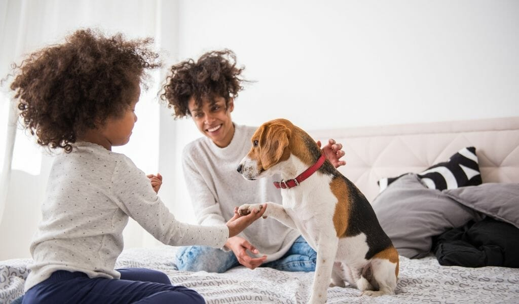 mother and young daughter playing on a bed with their beagle dog.