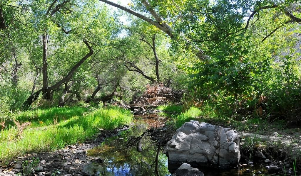 Small river under green trees at Mission Trails Nature Park