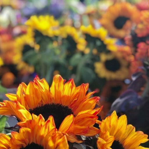 bunches of orange and yellow sunflowers at the Farmers Market Little Italy
