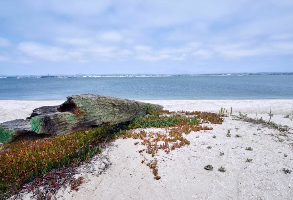 driftwood trunk on the white sand of silverstrand Coronado